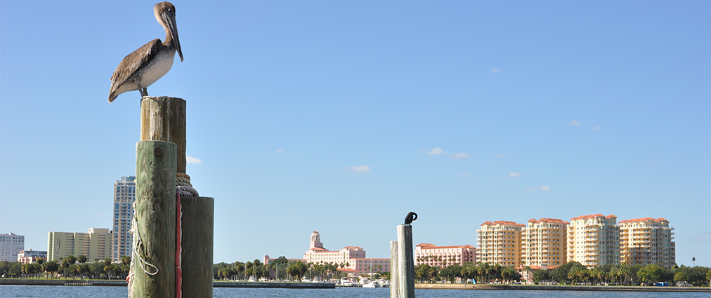 Pelican and Clearwater Beach condos